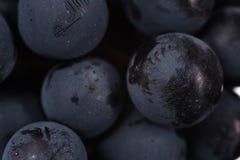 De donkere bos van druif in laag licht op zwarte achtergrond, macroschot, water daalt Royalty-vrije Stock Fotografie