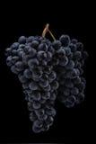 De donkere bos van druif in laag licht op zwarte achtergrond, macroschot, water daalt Stock Afbeeldingen