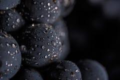 De donkere bos van druif in laag licht op zwarte achtergrond, macroschot, water daalt Royalty-vrije Stock Afbeelding