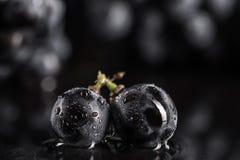 De donkere bos van druif in laag licht op zwarte achtergrond, macroschot, water daalt Stock Foto