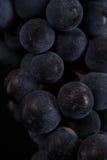 De donkere bos van druif in laag licht op zwarte isoleerde achtergrond, macroschot, waterdalingen Stock Afbeelding