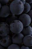 De donkere bos van druif in laag licht op zwarte isoleerde achtergrond, macroschot, waterdalingen Stock Foto's