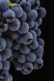 De donkere bos van druif in laag licht op zwarte isoleerde achtergrond, macroschot, waterdalingen Royalty-vrije Stock Foto