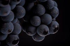 De donkere bos van druif in laag licht op zwarte isoleerde achtergrond, macroschot, waterdalingen Stock Afbeeldingen