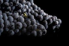 De donkere bos van druif in laag licht op zwarte isoleerde achtergrond, macroschot, waterdalingen Stock Fotografie