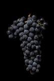 De donkere bos van druif in laag licht op zwarte isoleerde achtergrond, macroschot, waterdalingen Royalty-vrije Stock Afbeeldingen