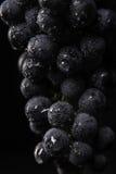 De donkere bos van druif in laag licht op zwarte isoleerde achtergrond, macroschot, waterdalingen Royalty-vrije Stock Afbeelding