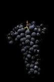De donkere bos van druif in laag licht op zwarte isoleerde achtergrond, macroschot, waterdalingen Stock Foto