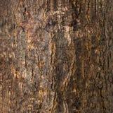 De donkere Bruine Gebarsten Textuur van de Boomschors Stock Afbeeldingen