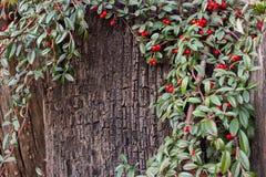 De donkere bruine schors met groen doorbladert en rood fruit Royalty-vrije Stock Fotografie