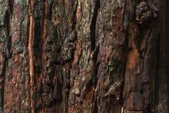 De donkere bruine Textuur van de Boomschors Royalty-vrije Stock Afbeeldingen