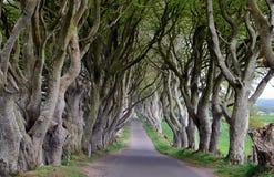 De donkere fotografie van de de boom oude weg van de Hagenbeuk Stock Foto's