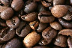 De donkere gehele achtergrond van koffiebonen Stock Afbeeldingen