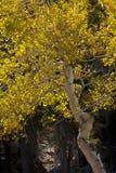 De donkere Gouden Beschermer van de Ingang Royalty-vrije Stock Foto