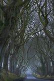 De donkere Hagen Royalty-vrije Stock Foto