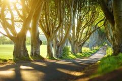 De Donkere Hagen, een weg van beukbomen langs Bregagh-Road in Provincie Antrim, Noord-Ierland Royalty-vrije Stock Foto's
