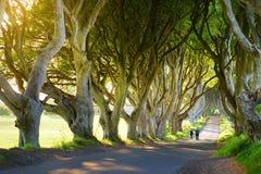 De Donkere Hagen, een weg van beukbomen langs Bregagh-Road in Provincie Antrim, Noord-Ierland Stock Foto's