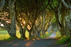 De Donkere Hagen, een weg van beukbomen langs Bregagh-Road in Provincie Antrim, Noord-Ierland Royalty-vrije Stock Afbeeldingen