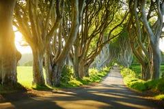 De Donkere Hagen, een weg van beukbomen langs Bregagh-Road in Provincie Antrim, Noord-Ierland Royalty-vrije Stock Foto