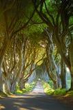 De Donkere Hagen, een weg van beukbomen langs Bregagh-Road in Provincie Antrim, Noord-Ierland Stock Foto