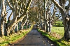 De Donkere Hagen in Ierland Stock Afbeeldingen