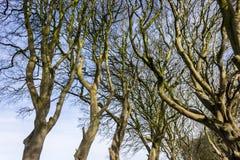 De Donkere Hagen, Noord-Ierland Stock Afbeeldingen