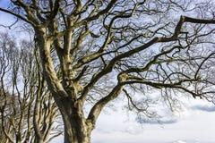 De Donkere Hagen, Noord-Ierland Royalty-vrije Stock Afbeelding