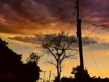 De donkere kleurrijke takken van de zonsondergangboom stock foto