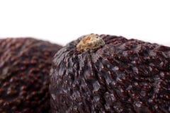 De donkere Macro van de Avocado Royalty-vrije Stock Foto
