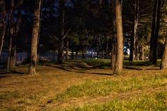 De donkere mening van het nachtpark Stock Afbeelding