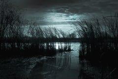 De donkere nacht in de rivier met riet wijst op het licht van moo Royalty-vrije Stock Foto's
