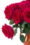 De donkere roze rozen sluiten omhoog Stock Afbeeldingen