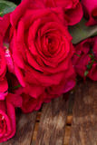 De donkere roze rozen sluiten omhoog Stock Foto's