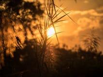 De Donkere silhouetten van het zonsonderganglandschap van dode kokospalm, Royalty-vrije Stock Foto