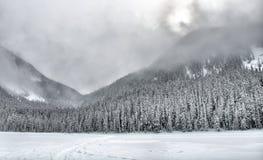 De donkere Sneeuw Behandelde Bomen van de Berg Stock Afbeeldingen