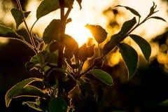 De donkere tak van boom is in het ontwerpen van zonlicht Zonstralen penetr Royalty-vrije Stock Foto
