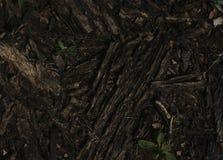 De donkere textuur van de boomschors donkere  Stock Foto's