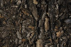 De donkere textuur van de boomschors donkere  Stock Afbeeldingen