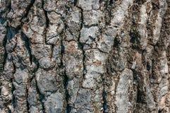 De donkere textuur van de boomschors met sterke aders Royalty-vrije Stock Foto's