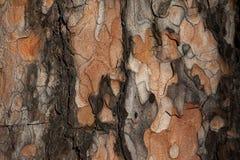 De donkere textuur van de lariksschors Royalty-vrije Stock Foto