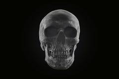 De donkere toon van de stillevenschedel Royalty-vrije Stock Fotografie
