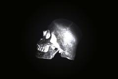De donkere toon van de stillevenschedel Royalty-vrije Stock Afbeelding