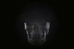 De donkere toon van de stillevenschedel Stock Afbeeldingen