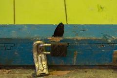 De donkere tropische vlinder zit dichtbij slot & x28; Kumai, Indonesia& x29; Royalty-vrije Stock Afbeelding
