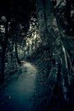 De donkere weg Stock Afbeelding