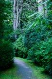 de donkere weg van de grintweg in avondbos Royalty-vrije Stock Fotografie