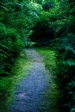 de donkere weg van de grintweg in avondbos Royalty-vrije Stock Afbeelding