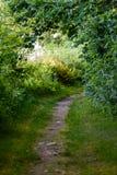 de donkere weg van de grintweg in avondbos Stock Afbeelding