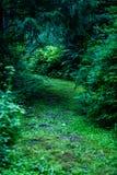 de donkere weg van de grintweg in avondbos Royalty-vrije Stock Afbeeldingen