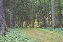 de donkere weg van de grintweg in avondbos - de uitstekende film ziet eruit Stock Fotografie